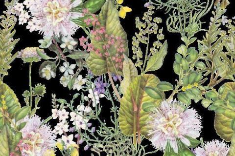 smart-art-botanical-floral-fynbos-pattern-design-16