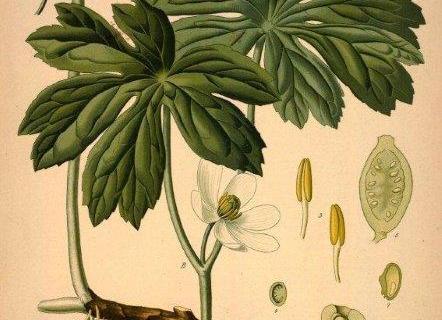 smart-art-botanical-floral-pattern-design-10