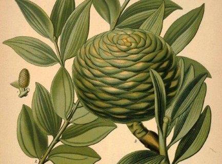 smart-art-botanical-floral-pattern-design-12
