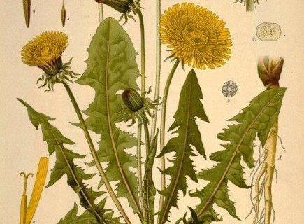 smart-art-botanical-floral-pattern-design-15
