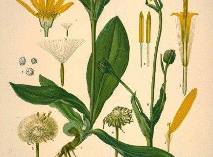 smart-art-botanical-floral-pattern-design-17