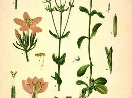 smart-art-botanical-floral-pattern-design-20