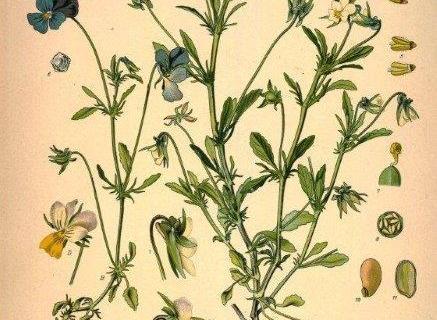 smart-art-botanical-floral-pattern-design-22