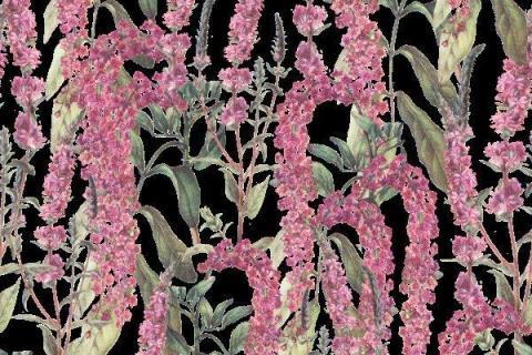 smart-art-botanical-floral-pattern-design-23