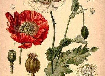 smart-art-botanical-floral-pattern-design-24