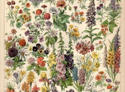 smart-art-botanical-floral-pattern-design-25