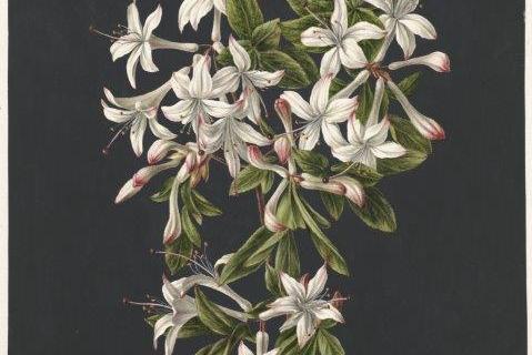 smart-art-botanical-floral-pattern-design-27