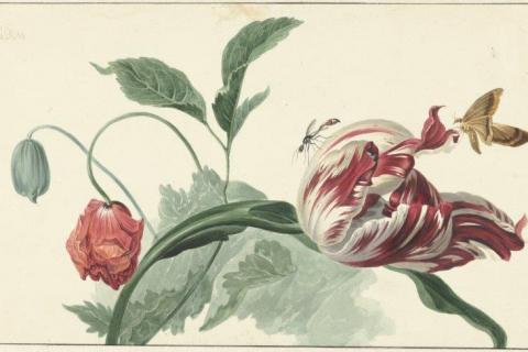 smart-art-botanical-floral-pattern-design-28