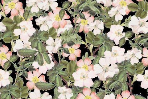 smart-art-botanical-floral-pattern-design-3