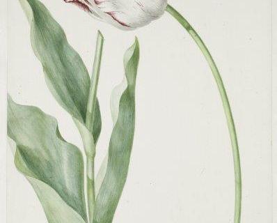 smart-art-botanical-floral-pattern-design-30