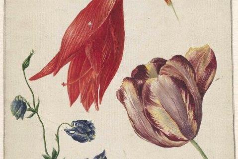 smart-art-botanical-floral-pattern-design-31