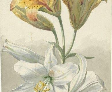 smart-art-botanical-floral-pattern-design-32