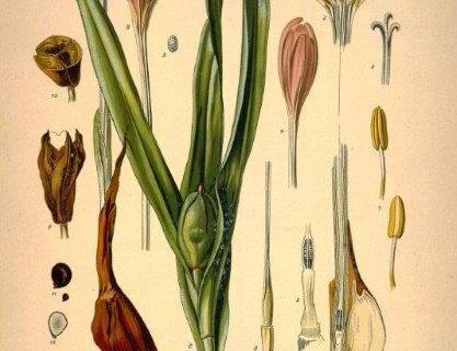 smart-art-botanical-floral-pattern-design-4
