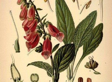 smart-art-botanical-floral-pattern-design-6