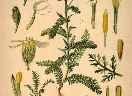 smart-art-botanical-floral-pattern-design-8