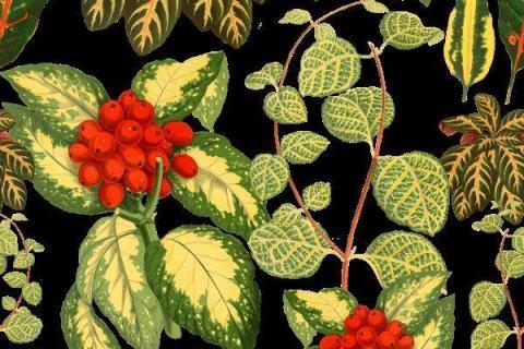 smart-art-tropical-leaves-banana-monster-palm-jungle-wallpaper-background-10