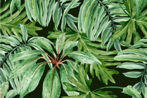 smart-art-tropical-leaves-banana-monster-palm-jungle-wallpaper-background-12