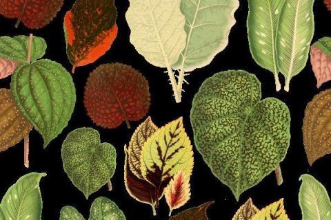 smart-art-tropical-leaves-banana-monster-palm-jungle-wallpaper-background-13