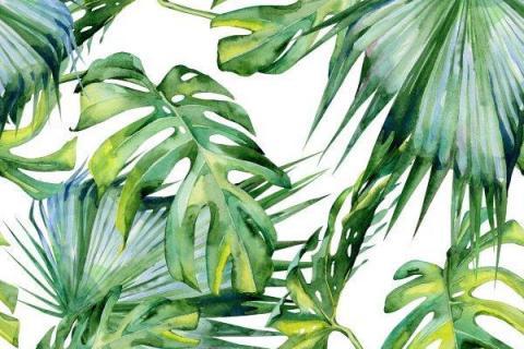 smart-art-tropical-leaves-banana-monster-palm-jungle-wallpaper-background-14