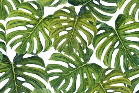 smart-art-tropical-leaves-banana-monster-palm-jungle-wallpaper-background-16