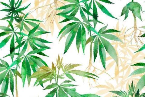 smart-art-tropical-leaves-banana-monster-palm-jungle-wallpaper-background-17