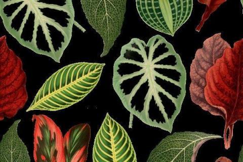 smart-art-tropical-leaves-banana-monster-palm-jungle-wallpaper-background-9