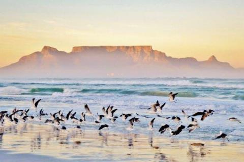 smart-art-cape-town-12-apostels-lions-head-cable-car-sea-aloes-waterfront-mountains-western-cape-116