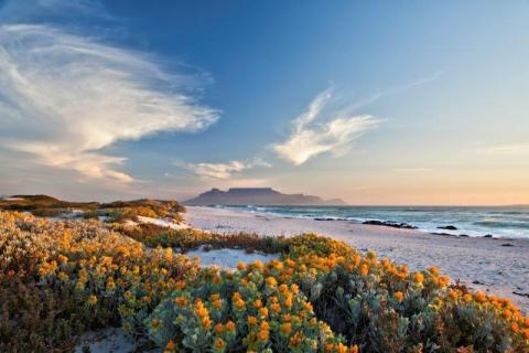 smart-art-cape-town-12-apostels-lions-head-cable-car-sea-aloes-waterfront-mountains-western-cape-119