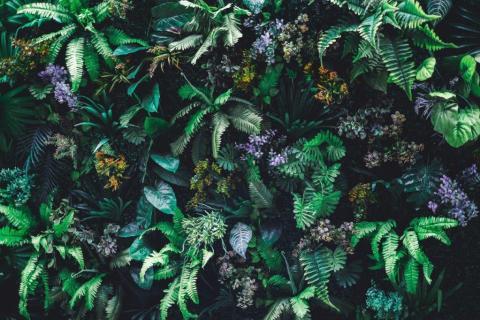 smart-art-flowers-roses-protea-fynbos-macro-poppy-16