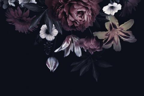 smart-art-flowers-roses-protea-fynbos-macro-poppy-18