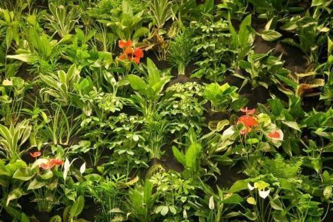 smart-art-flowers-roses-protea-fynbos-macro-poppy-19