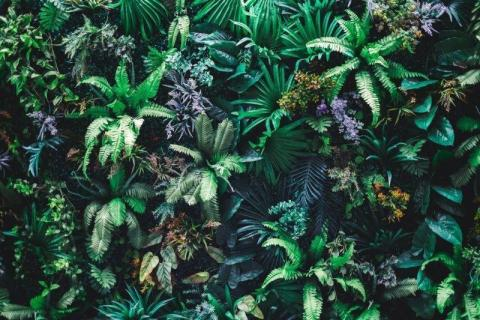 smart-art-flowers-roses-protea-fynbos-macro-poppy-20