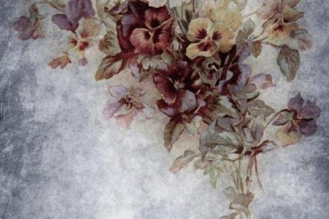 smart-art-flowers-roses-protea-fynbos-macro-poppy-22