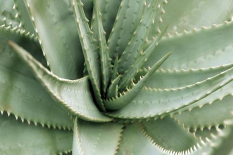 smart-art-flowers-roses-protea-fynbos-macro-poppy-23