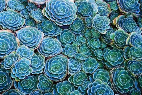 smart-art-flowers-roses-protea-fynbos-macro-poppy-25