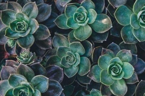 smart-art-flowers-roses-protea-fynbos-macro-poppy-29