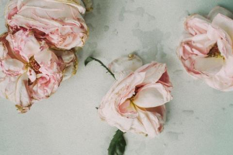 smart-art-flowers-roses-protea-fynbos-macro-poppy-30