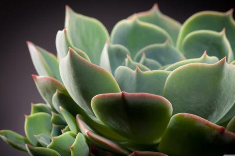 smart-art-flowers-roses-protea-fynbos-macro-poppy-32