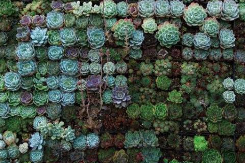 smart-art-flowers-roses-protea-fynbos-macro-poppy-33