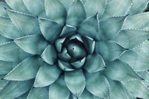 smart-art-flowers-roses-protea-fynbos-macro-poppy-35