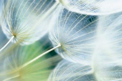 smart-art-flowers-roses-protea-fynbos-macro-poppy-43