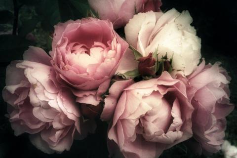 smart-art-flowers-roses-protea-fynbos-macro-poppy-46