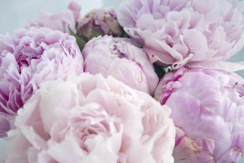 smart-art-flowers-roses-protea-fynbos-macro-poppy-48