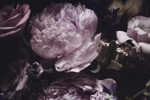 smart-art-flowers-roses-protea-fynbos-macro-poppy-49