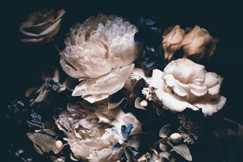 smart-art-flowers-roses-protea-fynbos-macro-poppy-50