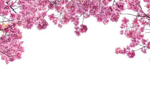 smart-art-flowers-roses-protea-fynbos-macro-poppy-51