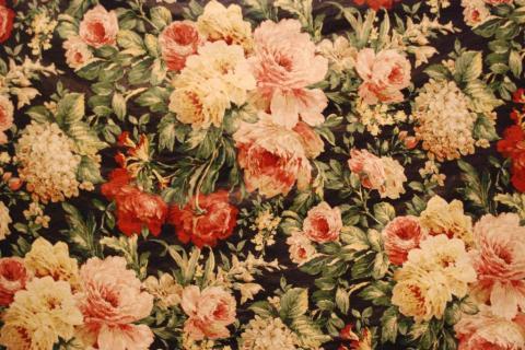 smart-art-flowers-roses-protea-fynbos-macro-poppy-52