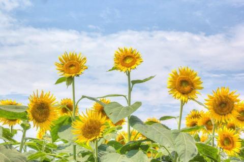 smart-art-flowers-roses-protea-fynbos-macro-poppy-53