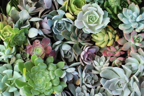 smart-art-flowers-roses-protea-fynbos-macro-poppy-55