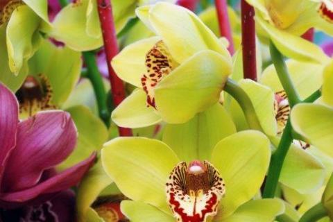 smart-art-flowers-roses-protea-fynbos-macro-poppy-58
